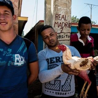 Cuba - La pelea de gallos